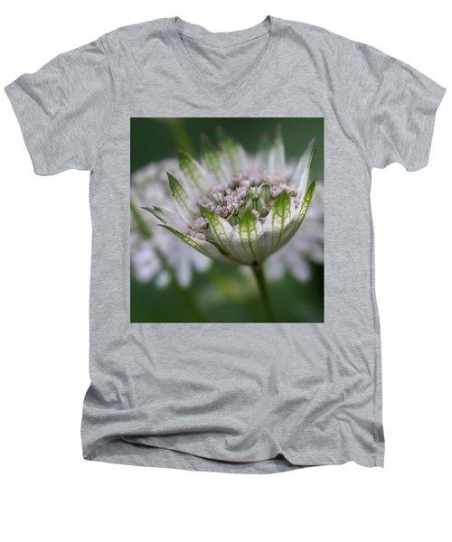 Astrantia Men's V-Neck T-Shirt