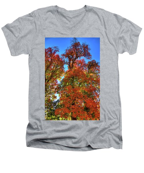 Men's V-Neck T-Shirt featuring the photograph Backlit Autumn by David Patterson