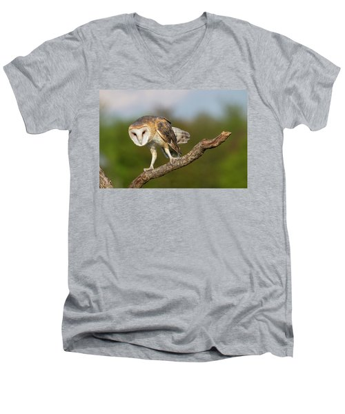Barn Owl 5151801 Men's V-Neck T-Shirt