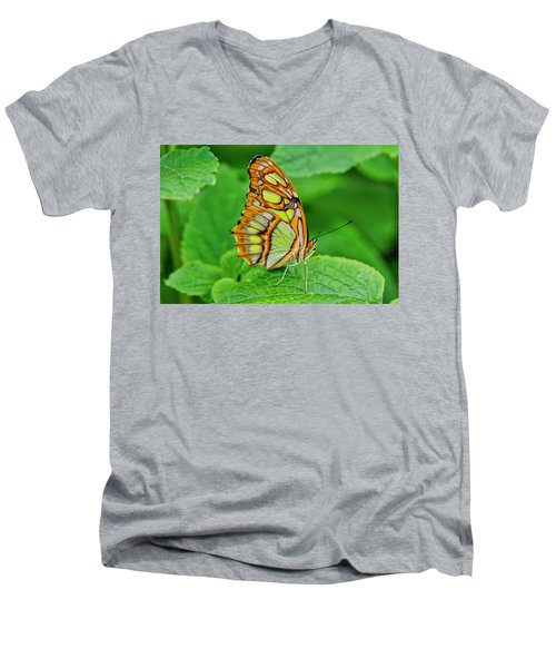 Butterfly Leaf Men's V-Neck T-Shirt