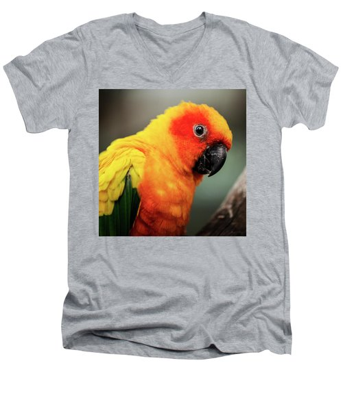 Close Up Of A Sun Conure Parrot. Men's V-Neck T-Shirt