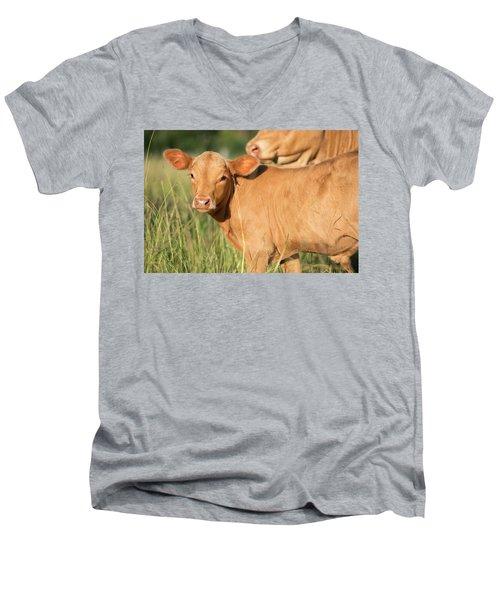 Cute Calf Men's V-Neck T-Shirt