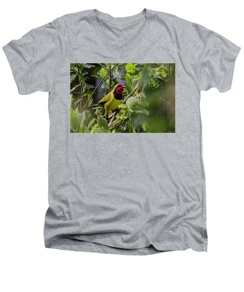 Doherty's Bushshrike Men's V-Neck T-Shirt