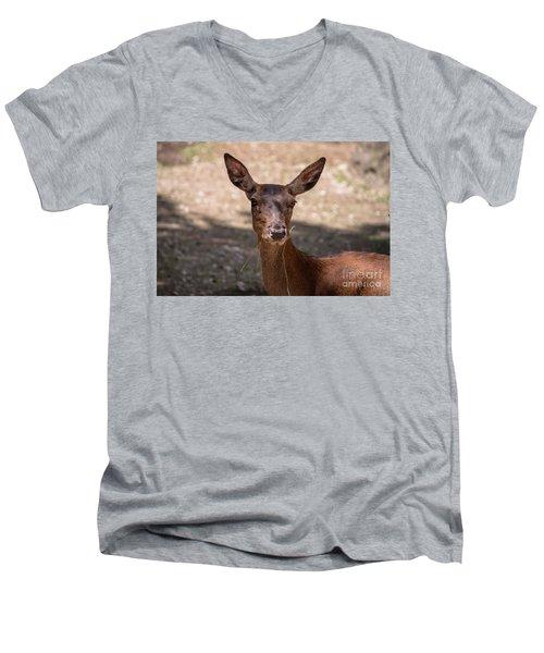 European Roe Deer Men's V-Neck T-Shirt