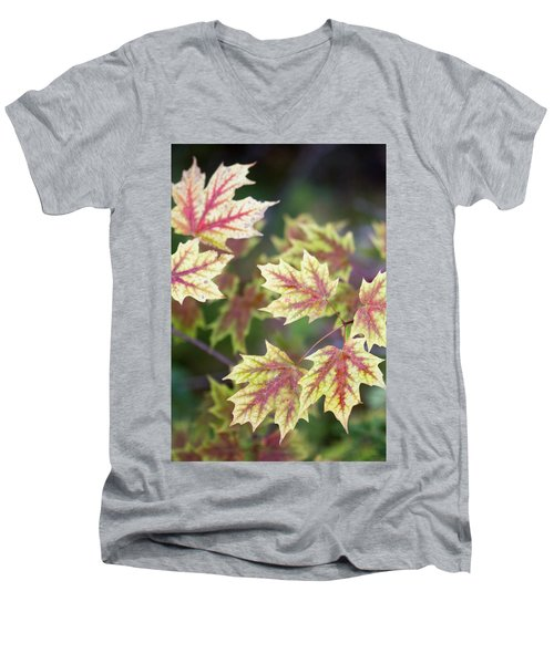 Men's V-Neck T-Shirt featuring the photograph Fall Red And Yellow Leaves 10081501 by Rick Veldman