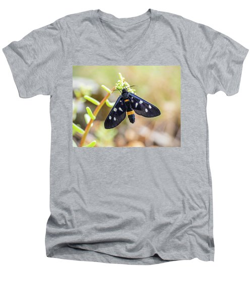 Fegea - Amata Phegea -black Insect With White Spots And Yellow Details Men's V-Neck T-Shirt