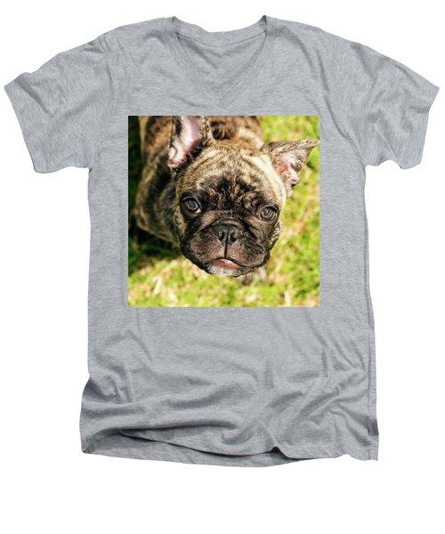 French Bull Dog Men's V-Neck T-Shirt