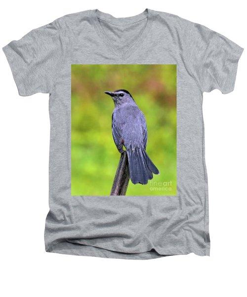 Grey Catbird Men's V-Neck T-Shirt