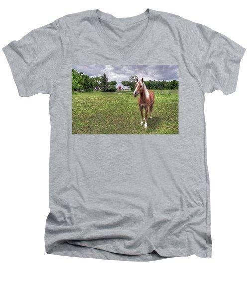 Horse In Pasture Men's V-Neck T-Shirt