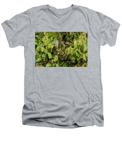 Klaas's Cuckoo Men's V-Neck T-Shirt