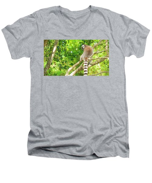 Lemur By Itself In A Tree During The Day. Men's V-Neck T-Shirt