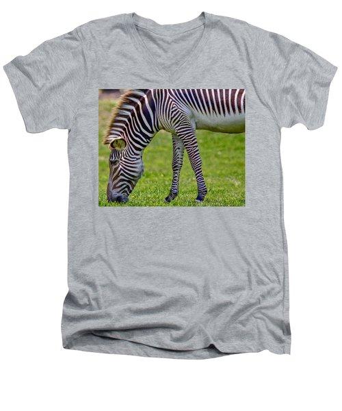 Love Zebras Men's V-Neck T-Shirt