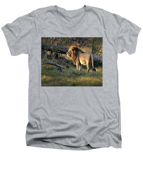 Male Lion In Botswana Men's V-Neck T-Shirt