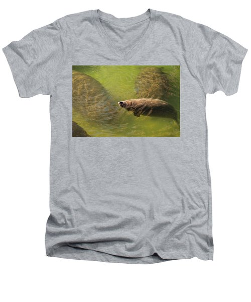 Manatees Men's V-Neck T-Shirt