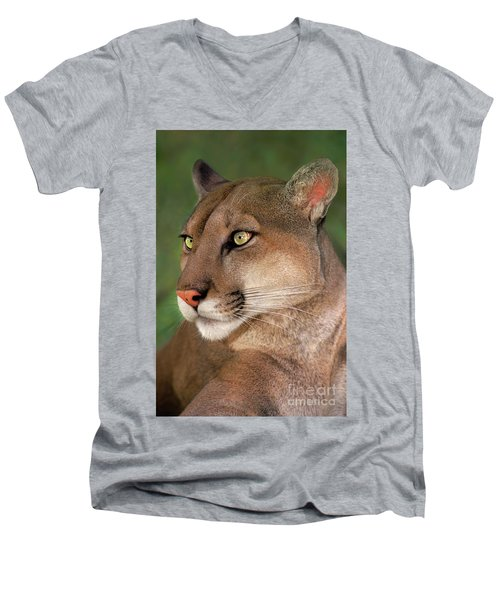 Men's V-Neck T-Shirt featuring the photograph Mountain Lion Portrait Wildlife Rescue by Dave Welling