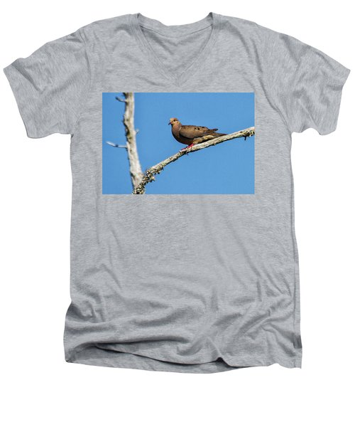 Mourning Dove Men's V-Neck T-Shirt