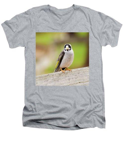 Noisy Miner Men's V-Neck T-Shirt