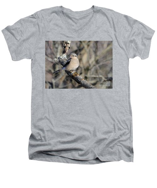 Northern Shrike Men's V-Neck T-Shirt
