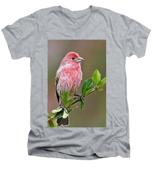 Purple Finch Men's V-Neck T-Shirt