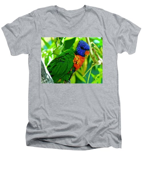 Men's V-Neck T-Shirt featuring the photograph Rainbow Lorikeet by Dan Miller