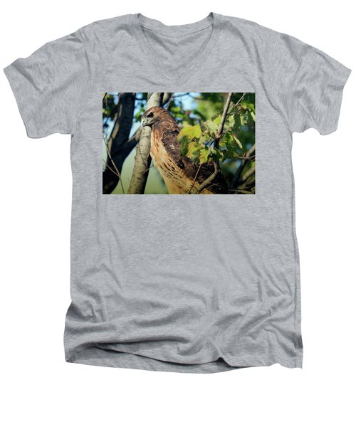 Red-tailed Hawk Looking Down From Tree Men's V-Neck T-Shirt