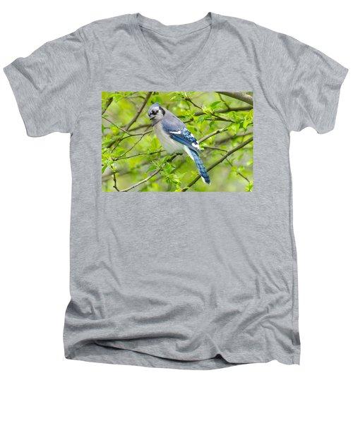 Springtime Bluejay Men's V-Neck T-Shirt