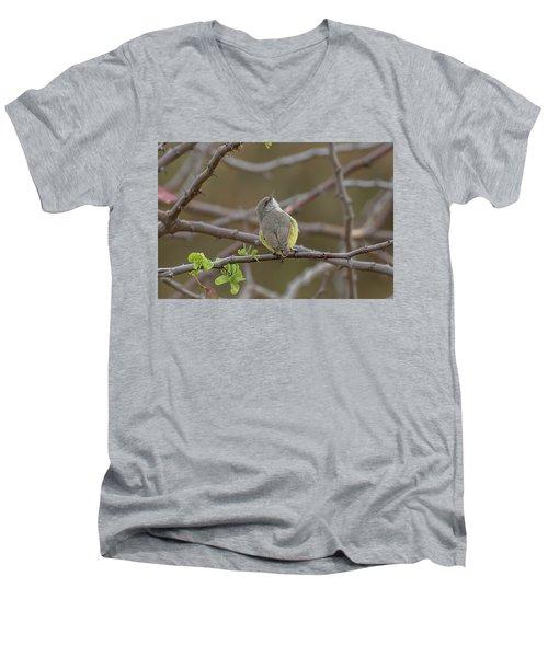 Yellow-bellied Eremomela Men's V-Neck T-Shirt