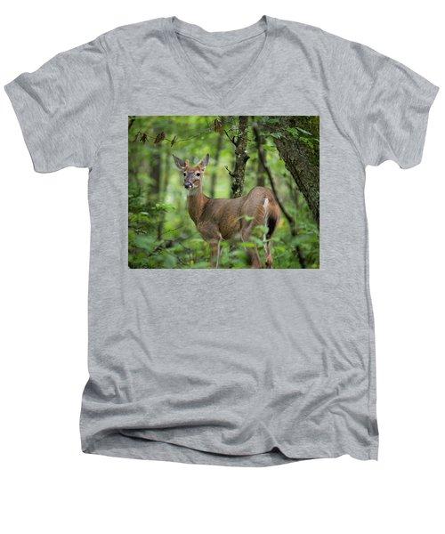 Young White-tailed Deer, Odocoileus Virginianus, With Velvet Antlers Men's V-Neck T-Shirt
