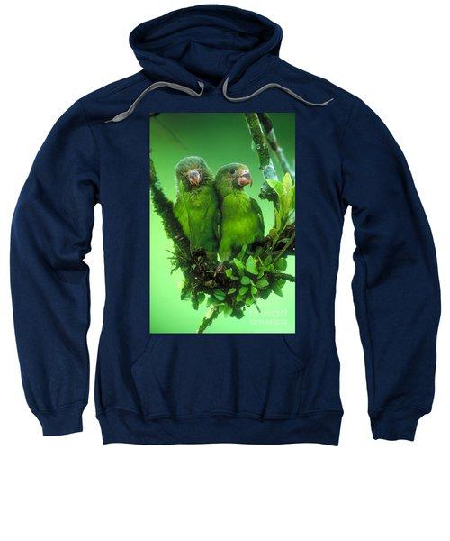Cobalt-winged Parakeets Sweatshirt by Art Wolfe