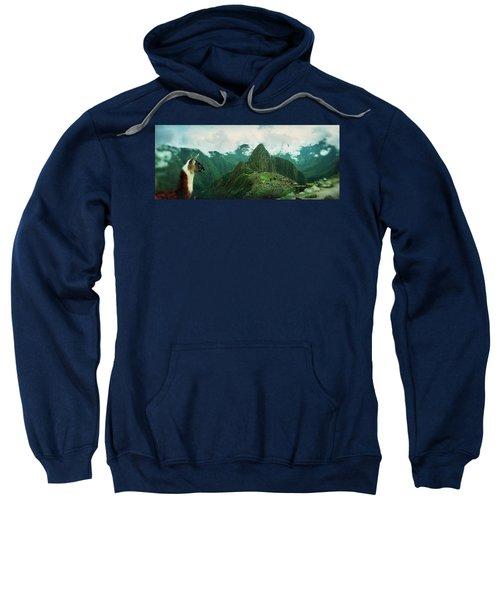 Alpaca Vicugna Pacos On A Mountain Sweatshirt
