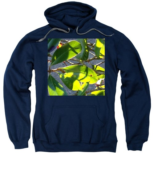 Backlit Leaves, Afternoon Light, Late Sweatshirt