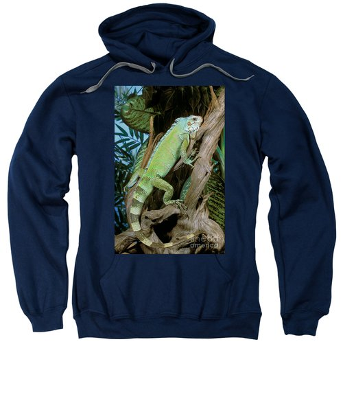 Common Iguana Sweatshirt