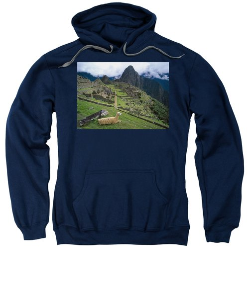 Llama At Machu Picchus Ancient Ruins Sweatshirt by Chris Caldicott