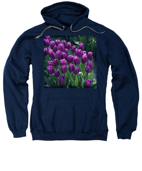Purple Tulips Sweatshirt