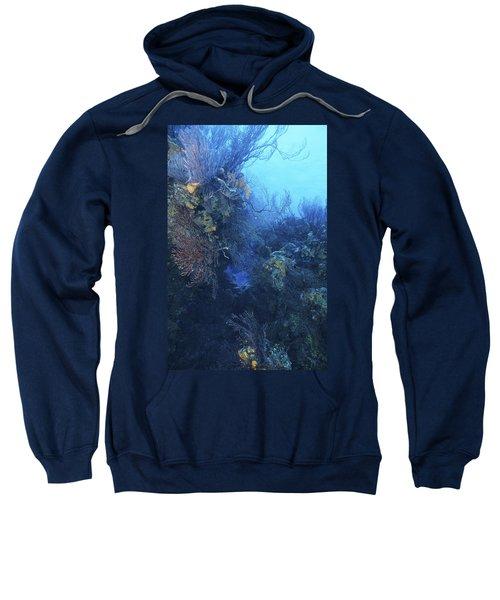 Quiet Beauty Sweatshirt