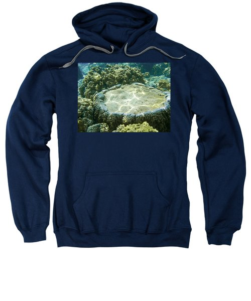 Table Top Coral Sweatshirt