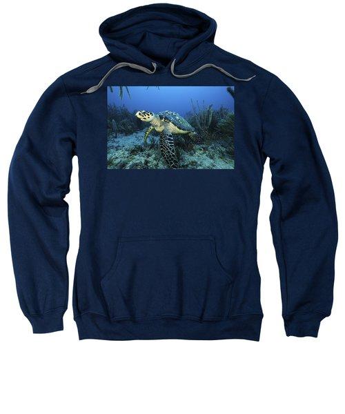 The Beauty Hawksbill Sweatshirt