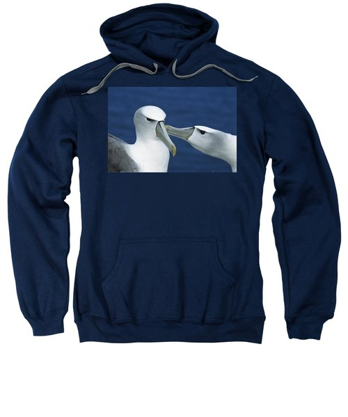 White-capped Albatrosses Courting Sweatshirt