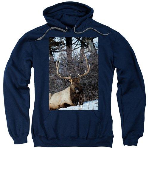 Wyoming Elk Sweatshirt
