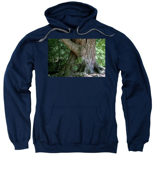 Big Fat Tree Trunk Sweatshirt