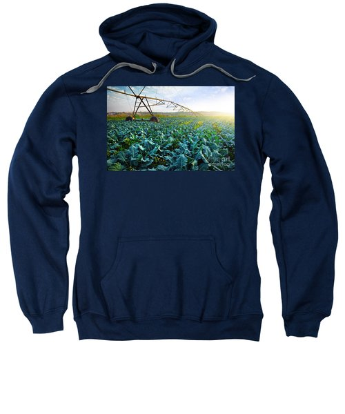 Cabbage Growth Sweatshirt by Carlos Caetano