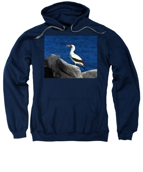 Nazca Booby Sweatshirt by Tony Beck