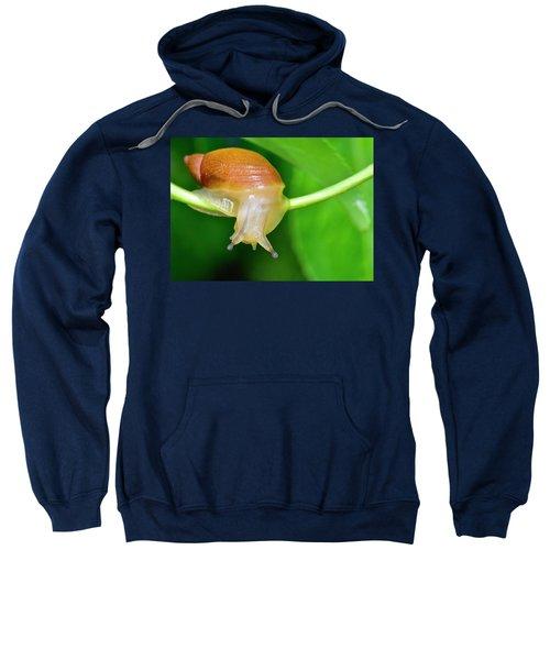 Morning Snail Sweatshirt