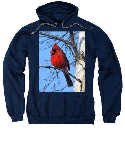 Northern Cardinal Sweatshirt