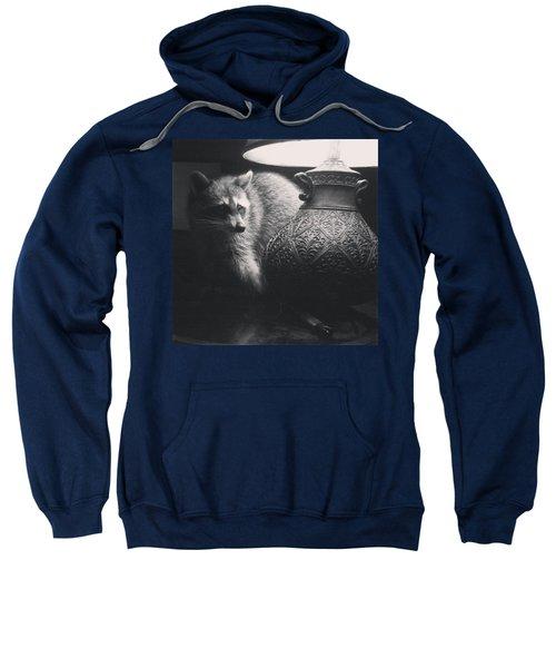 Crazy Coon  Sweatshirt