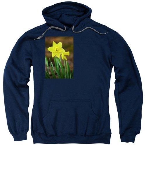 Beautiful Daffodil Flower Sweatshirt