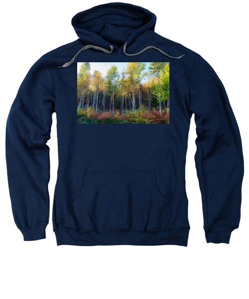 Birch Trees Turn To Gold Sweatshirt