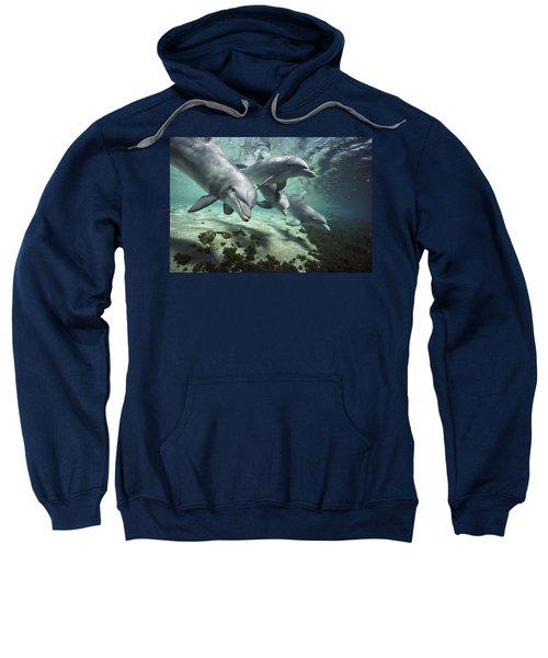 Four Bottlenose Dolphins Hawaii Sweatshirt