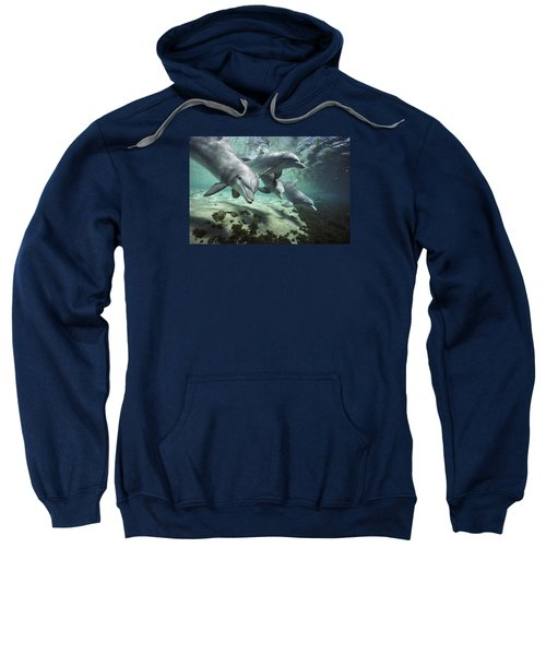 Four Bottlenose Dolphins Hawaii Sweatshirt