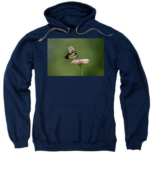 Butterfly On Zinnia Sweatshirt